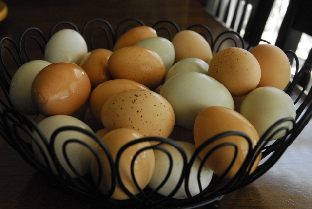 eggs 9-17 1